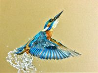 Kingfisher Colored Pencils Tutorial