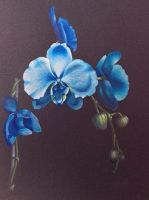 """Blue Orchids Abbreviated"" Video Class"